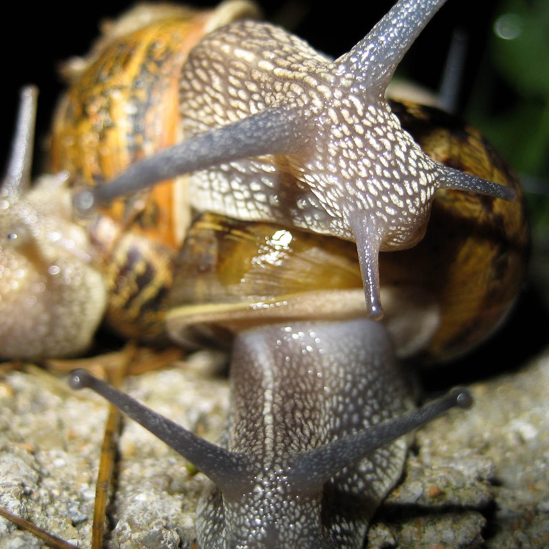 Portrait d'escargots de nuit