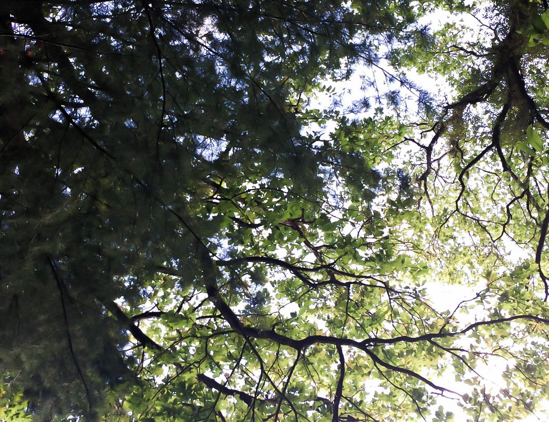 Sous les arbres, forêt de Touffou
