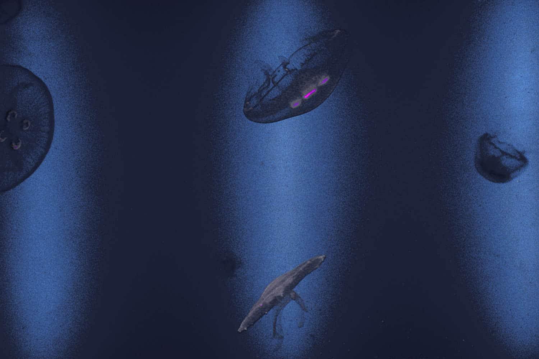 Méduses en aquarium