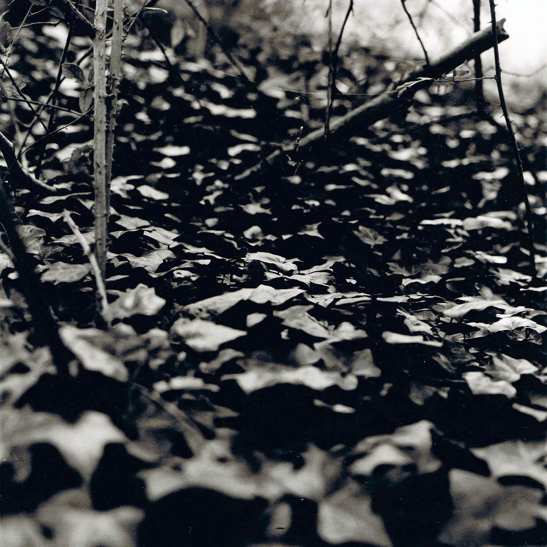 Portrait de feuilles mortes