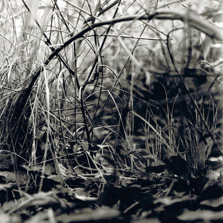 Portrait d'herbes sous un arc