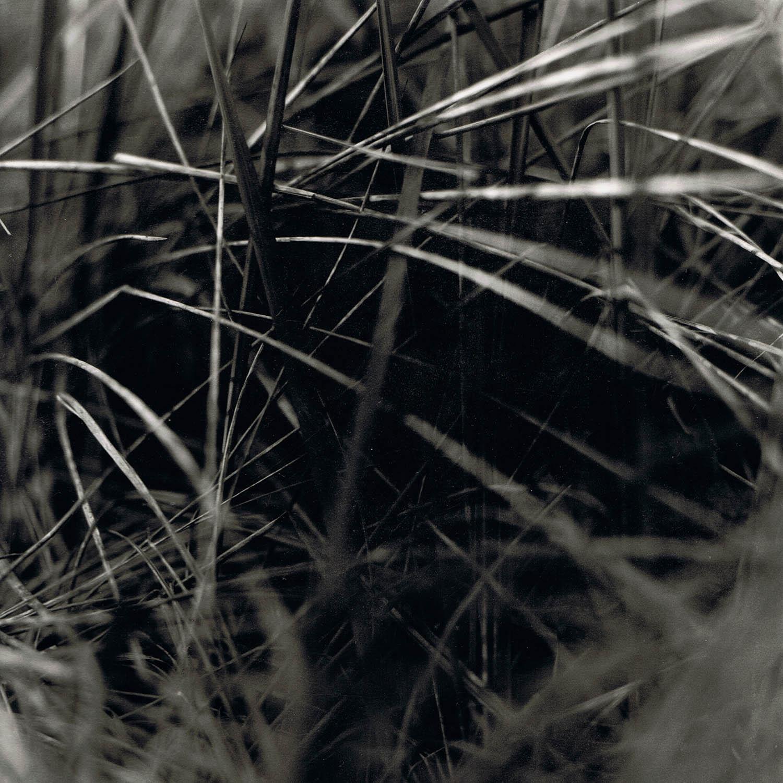 Portrait d'herbes folles