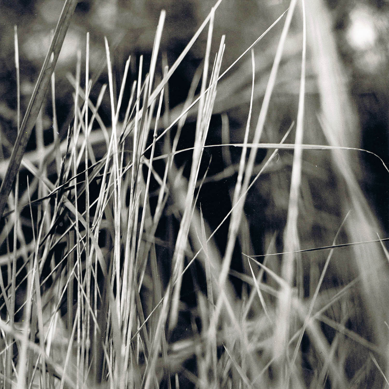 Portrait de hautes herbes
