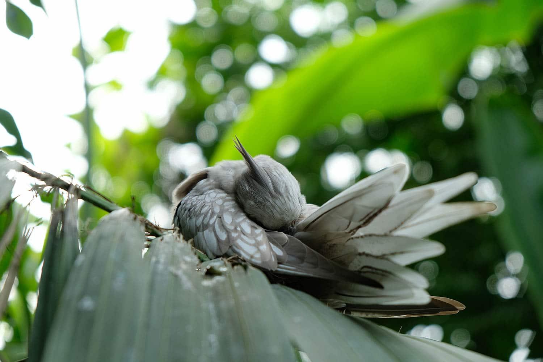Oiseau endormi sur des feuilles de palmier