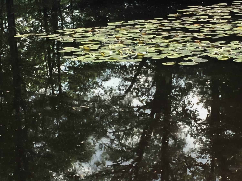 Reflets d'arbres et nénuphars, forêt de Touffou